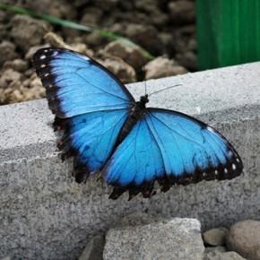 S-a deschis Casa Fluturilor la Muzeul Antipa